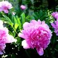 Цветочный бизнес в Украине